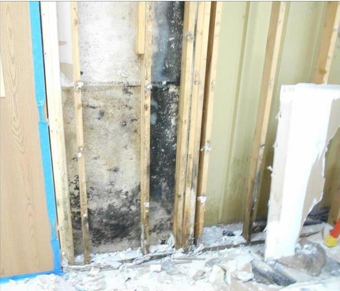 Mold Damage in an Office