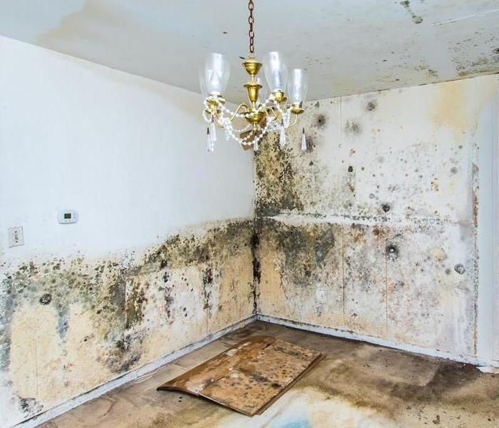 Mold Remediation Preventing Mold in Your Home