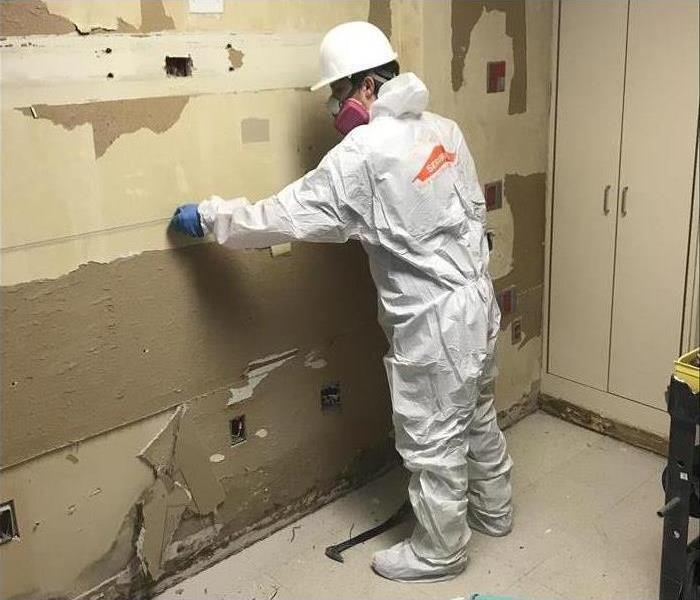 Mold Remediation Mold Remediation